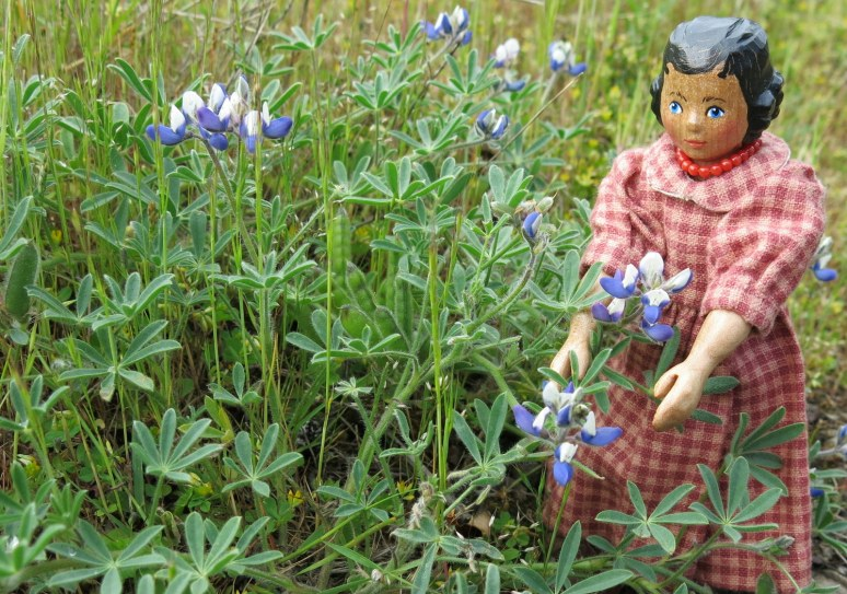 A miniature Lupin?