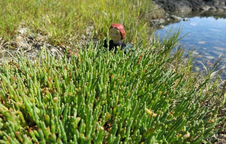 Hattie in the Salicornia