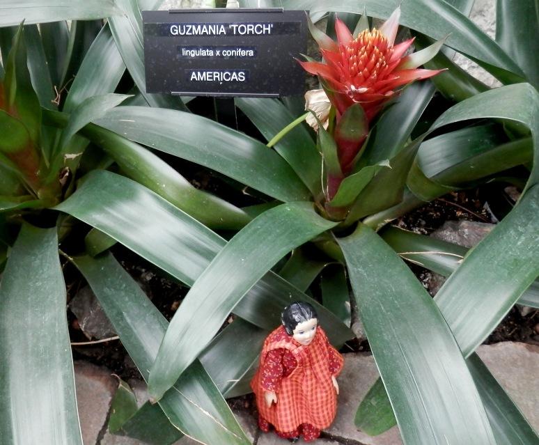 A Tropical Torch