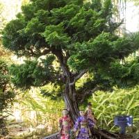 Takata Bonsai Garden 2