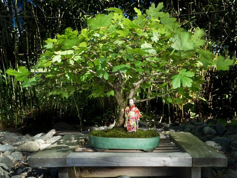 A Little Tree