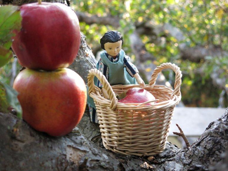 Big Baskets of Apples