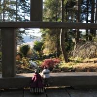 Takata Bonsai Garden in November