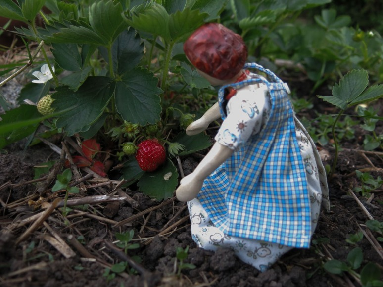 Strawberries (3)