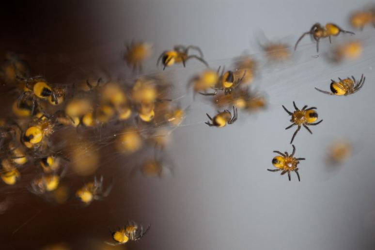 Tiny Spiders