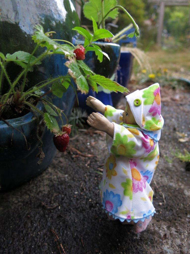 Dulcie's berries