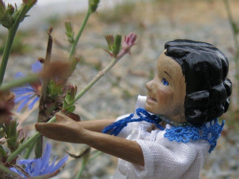 Chicory Girl