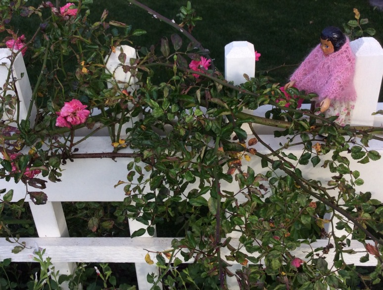 Picket Fence Roses