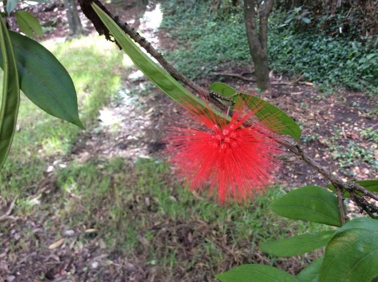 Red flower bush