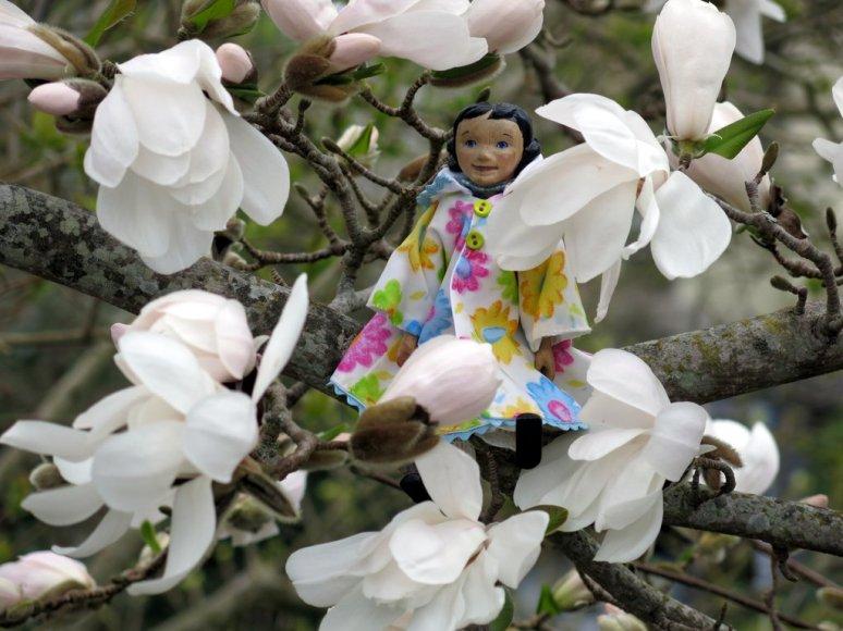Magnolia