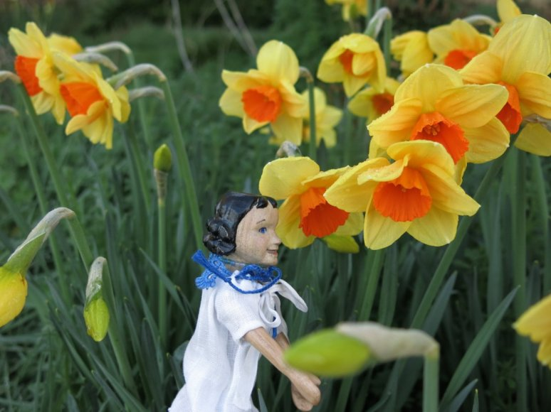 Narcissus outside
