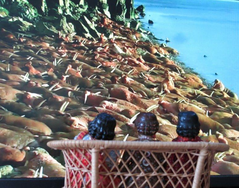 The Walrus Watchers