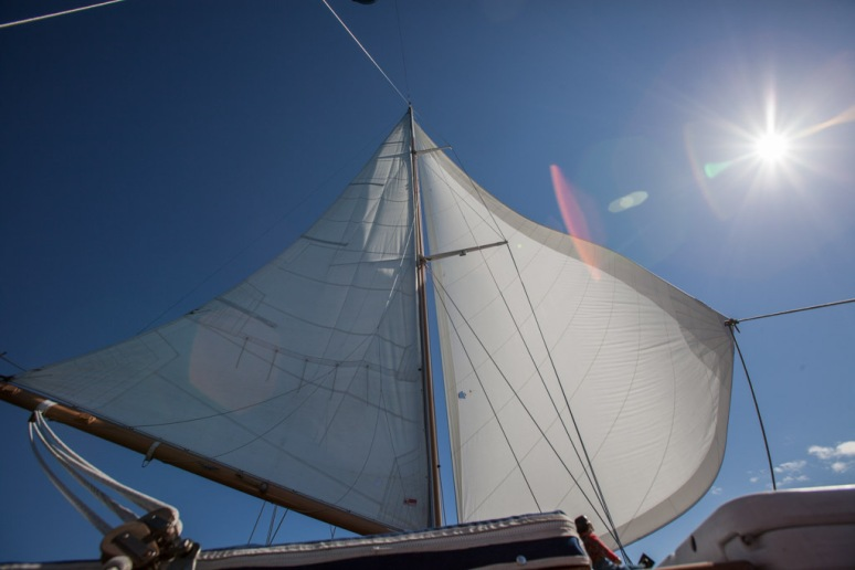 Foresail and Genoa