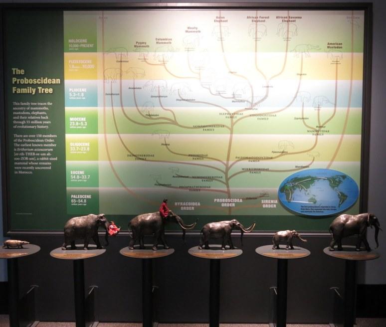 Proboscid Family Tree
