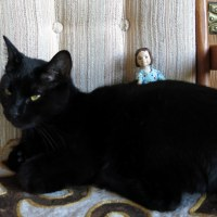 Amelia Appreciates Black Cats